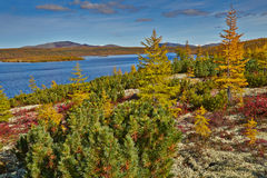 Autumn. Jack London's lake. The Magadan area. Kolyma IMG_4096 Royalty Free Stock Photo