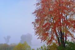 Autumn Jackson Hole Lake fotografering för bildbyråer