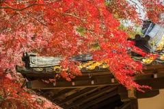 autumn Japan Obraz Royalty Free