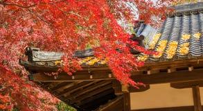 autumn Japan Obrazy Stock