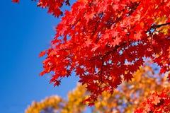 autumn japan Στοκ Εικόνες
