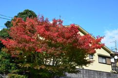 Autumn Japan the color red yellow and green royalty free stock photos