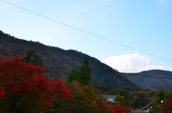 Autumn Japan the color red yellow and green royalty free stock photo