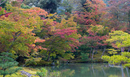Autumn Japan Royalty Free Stock Images