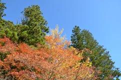 Autumn Japan el amarillo rojo del color y verde Imagenes de archivo