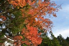 Autumn Japan el amarillo rojo del color y verde Fotos de archivo libres de regalías