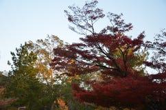 Autumn Japan el amarillo rojo del color y verde Fotografía de archivo