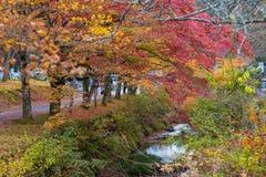Autumn Japan Stock Images