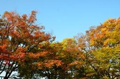 Autumn Japan le jaune rouge de couleur et vert Photos stock