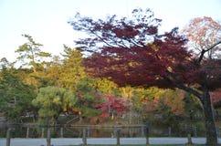 Autumn Japan le jaune rouge de couleur et vert Photographie stock libre de droits
