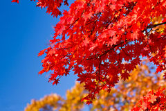 Autumn in Japan Stock Photo