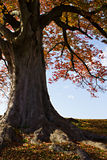 Autumn in Japan Stock Image