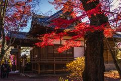 Autumn in Japan at shrine stock photo