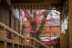 Autumn in Japan at shrine stock images