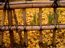 Autumn Japanese fence. A bamboo fence in autumn Royalty Free Stock Photography
