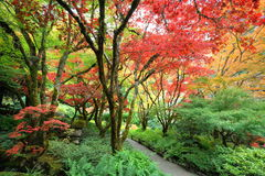 Autumn japanese garden Royalty Free Stock Image