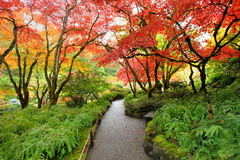 Autumn japanese garden Royalty Free Stock Images