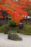 Autumn Japanese garden Stock Photos