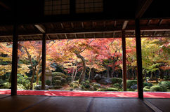 Autumn Japanese Garden with Maple Royalty Free Stock Photos