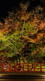 Autumn Japanese garden with maple trees at night Royalty Free Stock Photos