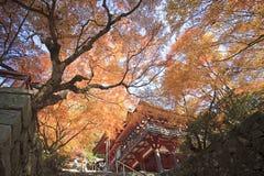 Autumn Japanese garden with maple Royalty Free Stock Photo