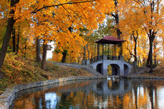 Autumn at the Japanese Park. Trees with golden foliage near a small lake in the autumn in Japanese Park Stock Photo