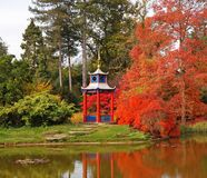 Autumn in a Japanese style Garden Royalty Free Stock Images