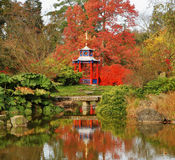 Autumn in a Japanese style Garden. Spectatcular colored Maples in a Japanes style garden with pond and pagoda shaped arbour Royalty Free Stock Photography