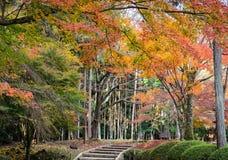 Autumn Japanese trädgård i den Daigoji templet japan kyoto Arkivbilder