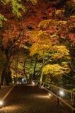 Autumn Japanese-tuin bij nacht Royalty-vrije Stock Afbeelding