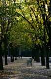 Autumn in the Jardin du Luxembourg. Leaves falling at the Luxembourg Royalty Free Stock Images