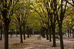 Autumn in the Jardin du Luxembourg. Leaves falling at the Luxembourg. Horizontal format Stock Image