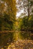 Autumn in Jesmond Dene vertical Royalty Free Stock Photos