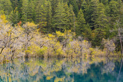 Autumn in jiuzhaigou, China Stock Images