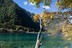 Autumn in Jiuzhaigou, Sichuan, China. Jiuzhai Valley or Jiuzhaigou National Park is located in the Aba Tibetan and Qiang Autonomous Prefecture of Sichuan royalty free stock photo