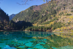 Autumn in Jiuzhaigou, Sichuan, China. Jiuzhai Valley or Jiuzhaigou National Park is located in the Aba Tibetan and Qiang Autonomous Prefecture of Sichuan stock image