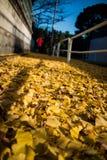 Autumn Jogger Foto de Stock