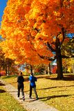 Autumn Jogging. Two women jog among the autumn leaves on a crisp fall day Royalty Free Stock Image