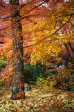 Autumn in Jojakko-ji Temple , Kyoto,Japan Stock Photography