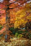 Autumn in Jojakko-ji Temple , Kyoto,Japan Royalty Free Stock Image