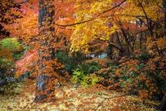 Autumn in Jojakko-ji Temple , Kyoto,Japan Stock Photo