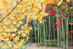 The Autumn in Jojakko-ji Temple , Kyoto,Japan Royalty Free Stock Images
