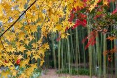 The Autumn in Jojakko-ji Temple , Kyoto,Japan Stock Photo