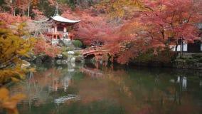 The Autumn in Jojakko-ji Temple , Kyoto,Japanes in Fushimi Inari Shrine, Kyoto, Japan. Kyoto, Japan - Nov, 23 2013 : The Autumn in Jojakko-ji Temple , Kyoto stock video