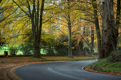 An Autumn journey road trip, forrest. An Autumn road through a forrest Stock Image