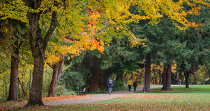 Autumn Joys. Several walkers and people on bicycles enjoying a colorful fall day on the bike path in Eugene, Oregon Royalty Free Stock Photos