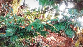Autumn jungle in Poland royalty free stock photos