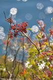 Autumn Kaleidoscope Stock Images