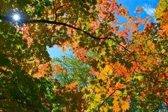 Autumn Kaleidoscope-2. Royalty Free Stock Image