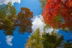 Autumn Kaleidoscope. Stock Images